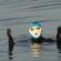 Extreem: zwemmend rondje Groot-Britannië